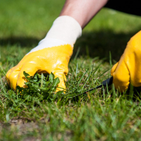 Lawn Repair Southfields