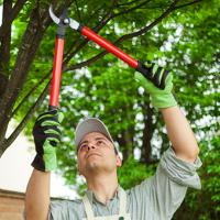 Tree Pruning Southfields