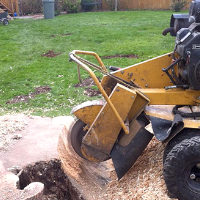Stump Grinding Southfields